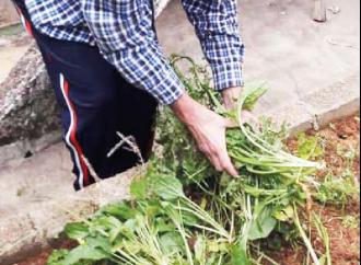 Divinolandia Desenvolve projeto de horta na escola