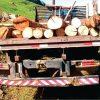 Polícia Ambiental apreende madeira em sítio de Divinolândia