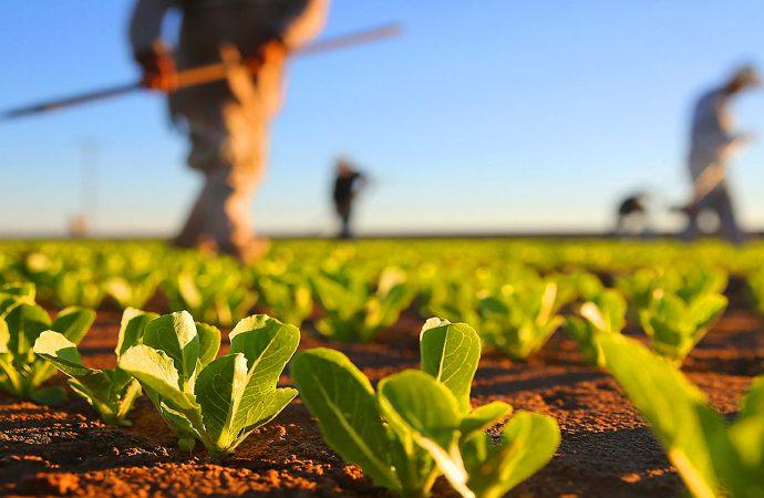 Novo cenário para a agricultura