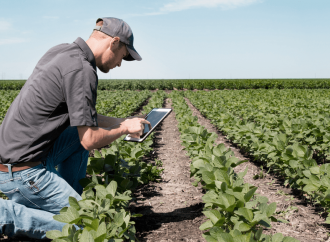 Agricultura adota novos procedimentos diante de pandemia