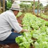 Agronegócio: orientações aos produtores para evitar contaminações