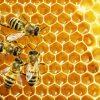 Secretaria de Agricultura apresenta ações destinadas à conservação das abelhas
