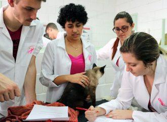 Hospital Veterinário reinicia atendimento em São João da Boa Vista
