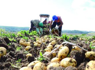 Betão teve participação ativa no Condomínio dos Bataticultores