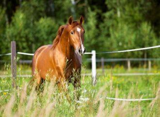 Cascos e pelagem saudáveis são essenciais para equinos de alta performance