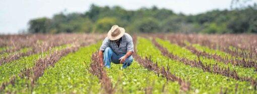 Aberto prazo para produtores rurais entregarem a DIPAM