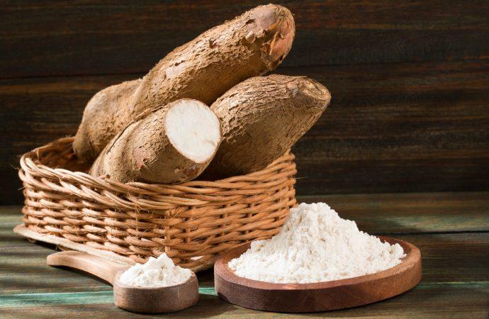 Mandioca: indústria de fécula e derivados diversifica produção e eleva oferta