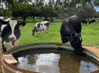 Escassez hídrica impacta pecuária e Embrapa alerta criadores